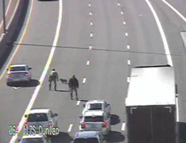 Cão invadiu rodovia e provocou seu bloqueio em Phoenix. (Foto: Reprodução/ABC 15)