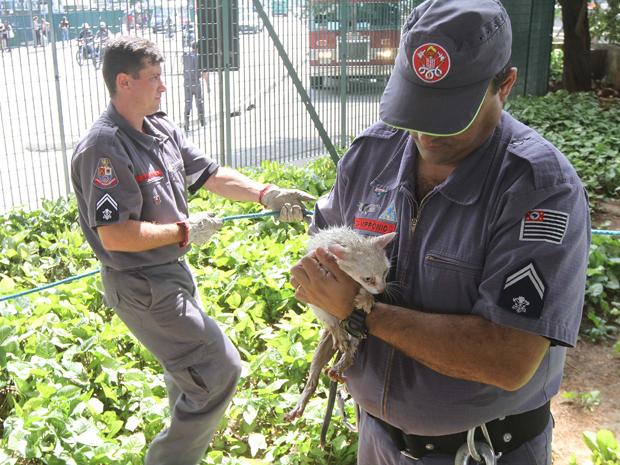 Gato recebe primeiros cuidados dos bombeiros (Foto: Luiz Guarnieri/ AE)