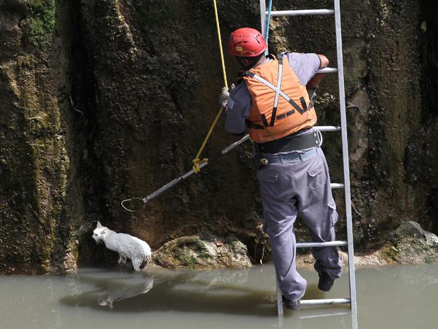 Gato cai no Rio Tamanduateí e é resgatado pelos bombeiros (Foto: Luiz Guarnieri/ AE)