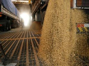 Por dia são escoadas cerca de 100 mil toneladas de grãos no Porto de Paranaguá. (Foto: Divulgação Porto de Paranaguá)