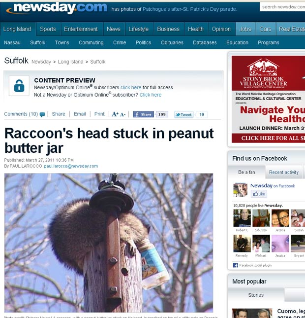 Guaxinim foi flagrado com a cabeça entalada em um pote de pasta de amendoim. (Foto: Reprodução)