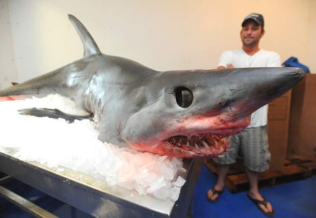 Tubarão de 2,4 metros e 170 quilos saltou dentro de seu barco. (Foto: Jason Kresse/AP)