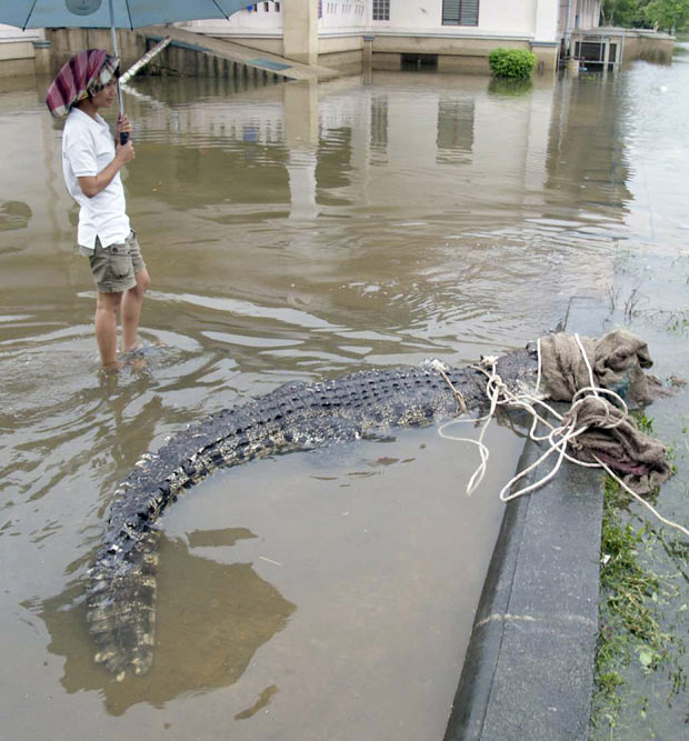 Crocodilo Tailândia 1 (Foto: AP Photo)