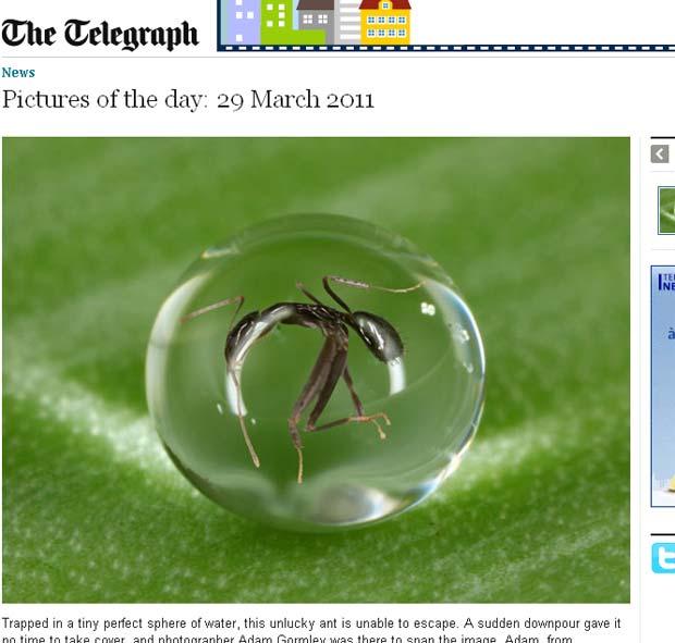 Formiga acabou presa dentro de uma bolha de água. (Foto: Reprodução/Daily Telegraph)