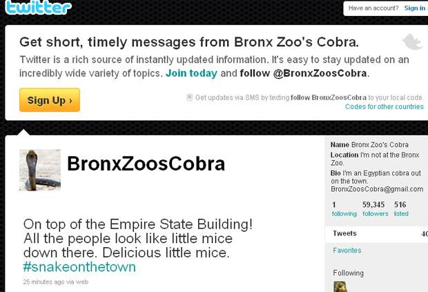Conta tinha mais de 59 mil seguidores nesta terça. (Foto: Reprodução)
