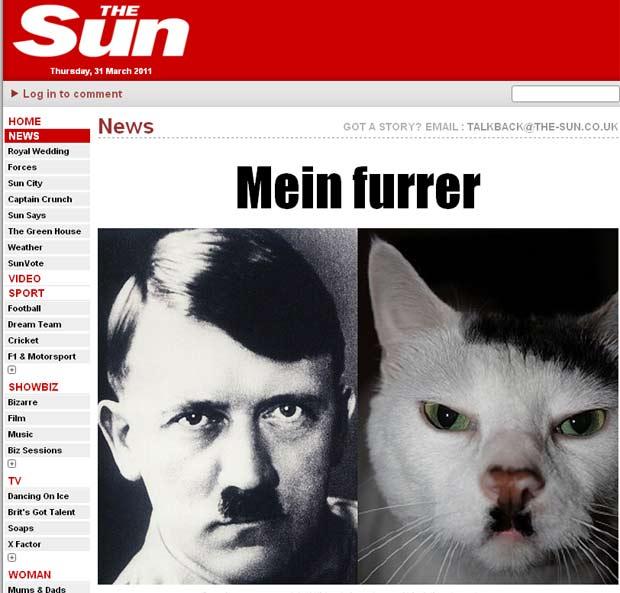 Gato que seria parecido do nazista Adolf Hitler. (Foto: Reprodução/The Sun)