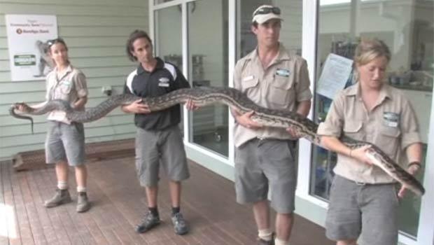 'Maximus' vive em um santuário de animais na Austrália. (Foto: Reprodução)