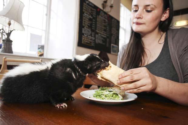 Hannah Haywood mantém um cangambá como animal de estimação. (Foto: Laurentiu Garofeanu/Barcroft Me/Getty Images)