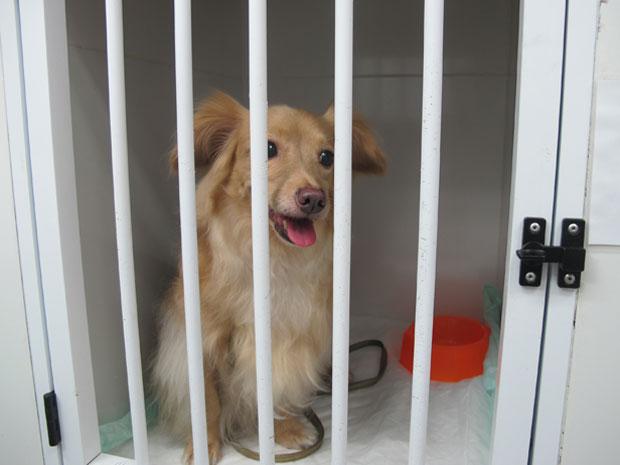 Cachorrinha sem raça definida aguarda a chegada da dona (Foto: Letícia Macedo / G1)