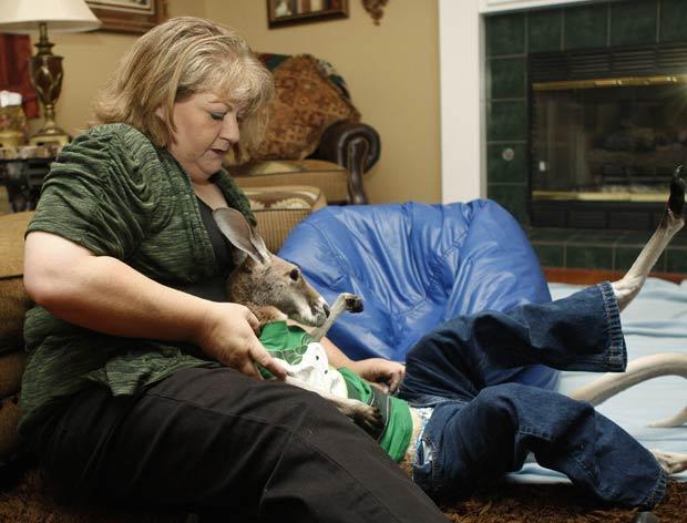 Canguru usa roupas com se fosse humano. (Foto: Sue Ogrocki/AP)