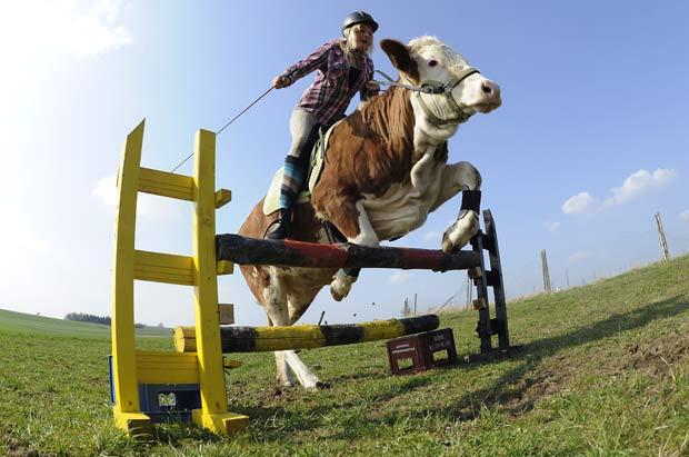 Regina Mayer salta obstáculo com a vaca 'Luna'. (Foto: Kerstin Jönsson/AP)