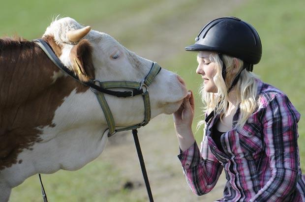 Regina Mayer contou que conseguiu ensinar a vaca após horas de treinamento. (Foto: Kerstin Jönsson/AP)