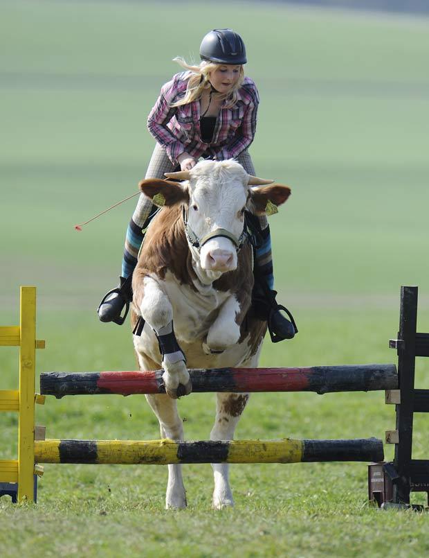 Regina Mayer usa vaca como montaria para saltar obstáculos. (Foto: Kerstin Jönsson/AP)