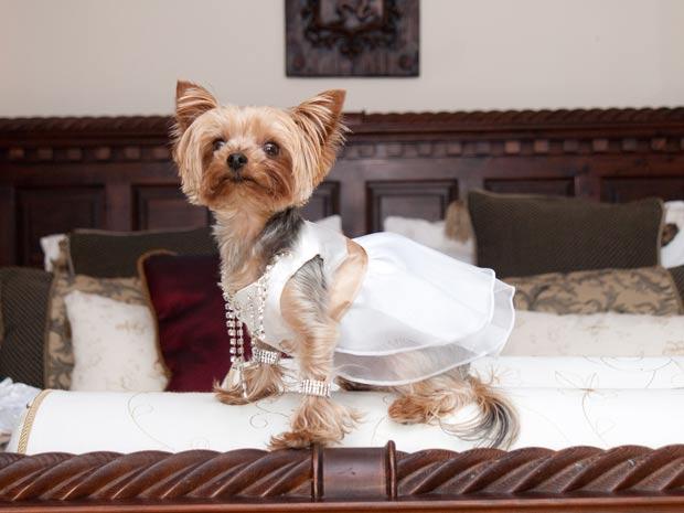 'Dama de honra', cadela 'Lulu' usou vestido de 100 libras. (Foto: Mike Gilmore/Barcroft Media/Getty Images)