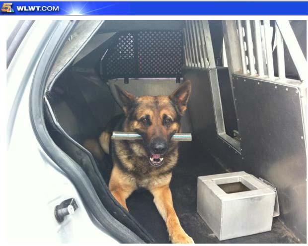 Homem foi acusado de provocar o cão policial 'Timber'. (Foto: Reprodução)
