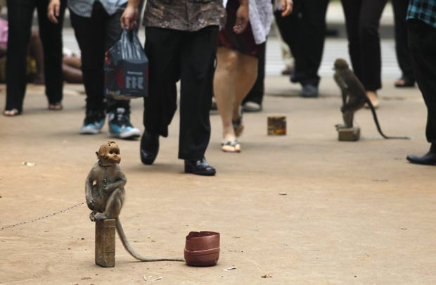 Macaco mascarado é flagrado 'pedindo' esmola na Indonésia (Foto: Reuters)