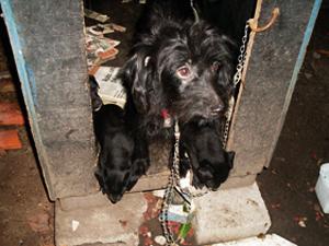 Cachorra adota por vizinha já teve filhotes (Foto: Christiano Ferreira/G1)