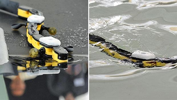 Outro robô biônico apresentado na feira em Nantes, na França, imita os movimentos e as cores de uma salamandra, uma espécie de anfíbio. Usando animais como modelos para robôs, cientistas pretendem usá-los para fazer testes biológicos. (Foto: Damien Meyer/AFP)
