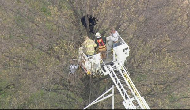 Bombeiros usaram uma plataforma elevatória para chegar até o animal. (Foto: Reprodução/Fox News)