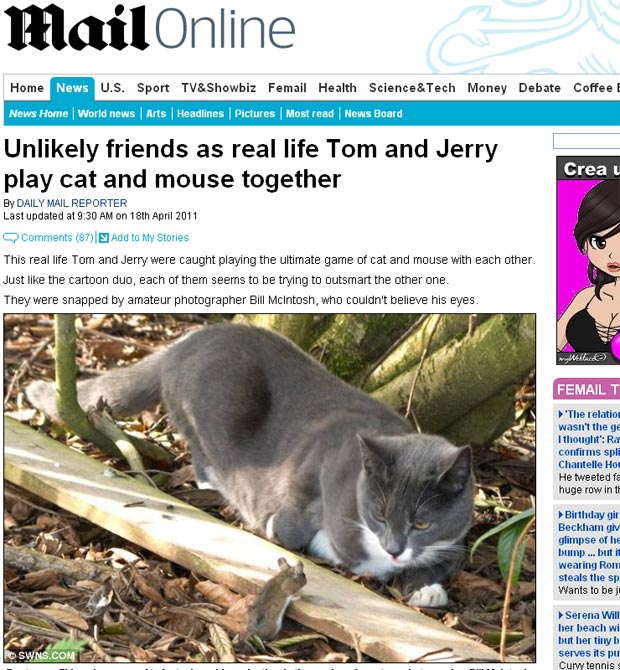 Bill McIntosh diz que gato e rato estavam brincando juntos. (Foto: Reprodução/Daily Mail)