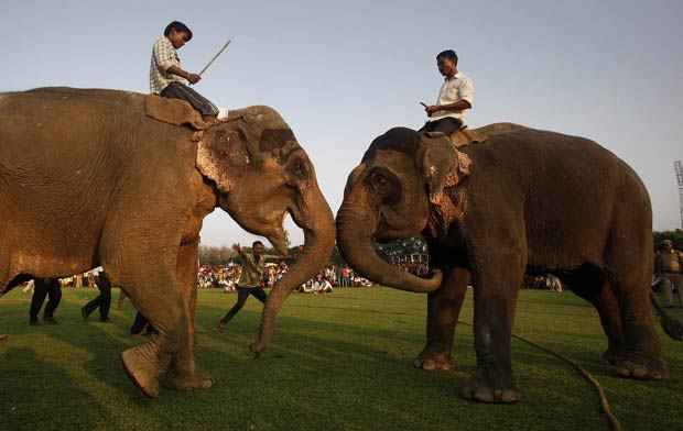 Luta entre elefantes é realizada durante as celebrações do festival Rongali Bihu. (Foto: Anupam Nath/AP)