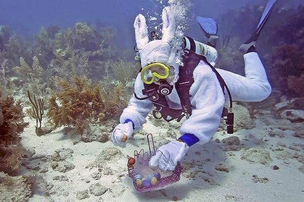 Spencer Slate coloca ovos em santuário marinho em Key Largo. (Foto: Bob Care/Florida Keys News Bureau/AP)