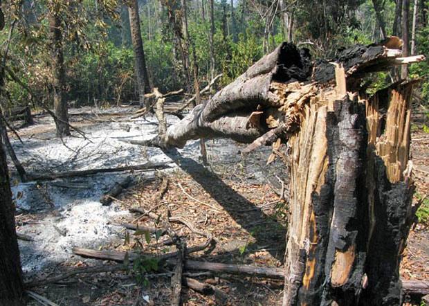 Desmatamento em Querência (MT), município que conseguiu reduzir o problema consideravelmente. (Foto: Dennis Barbosa/Globo Natureza)