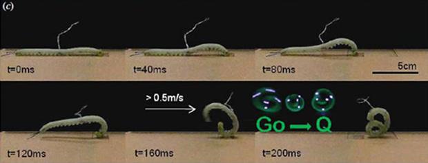 Robô GoQBot faz o movimento de rolamento balístico (Foto: Bioinspiration and Biomimetics / Reprodução)