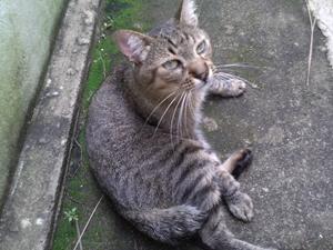 Gato Esquilo tem rabo cortado (Foto: Arquivo pessoal/ Divulgação)