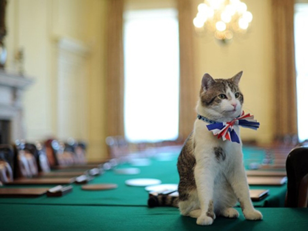 Larry, o 'gato oficial' da residência do premiê britânico, 'prova' gravata-borboleta com as cores do país, que vai usar na festa dada pelo primeiro-ministro para celebrar o casamento do Príncipe William e de Kate Middleton, que vai ocorrer nesta sexta (Foto: AFP)