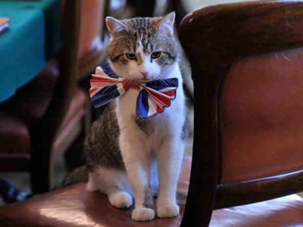Larry foi 'contratado' pelo gabinete britânico para perseguir os ratos de Downing Street (Foto: AFP)