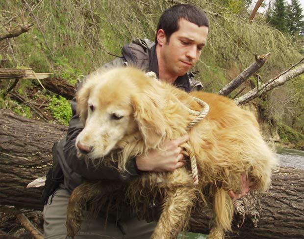 Cão é resgatado após queda de ribanceira nos EUA. (Foto: Clackamas Co. Sheriff's Office/Divulgação)