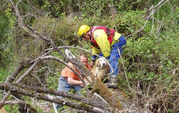 Cães foram resgatados apenas com ferimentos leves. (Foto: Clackamas Co. Sheriff's Office/Divulgação)