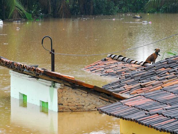 Cachorro tenta escapar de enchente em telhado de casa, nesta terça (3), em Água Preta (PE) (Foto: Bobby Fabisak/JC Imagem/AE)