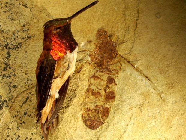 Formigas gigantes 1 (Foto: Bruce Archibald / via BBC)