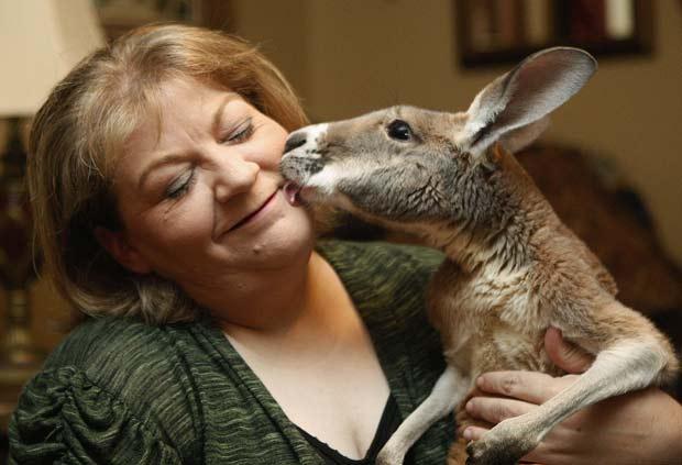 Christie Carr poderá manter seu canguru de estimação. (Foto: Sue Ogrock/AP)