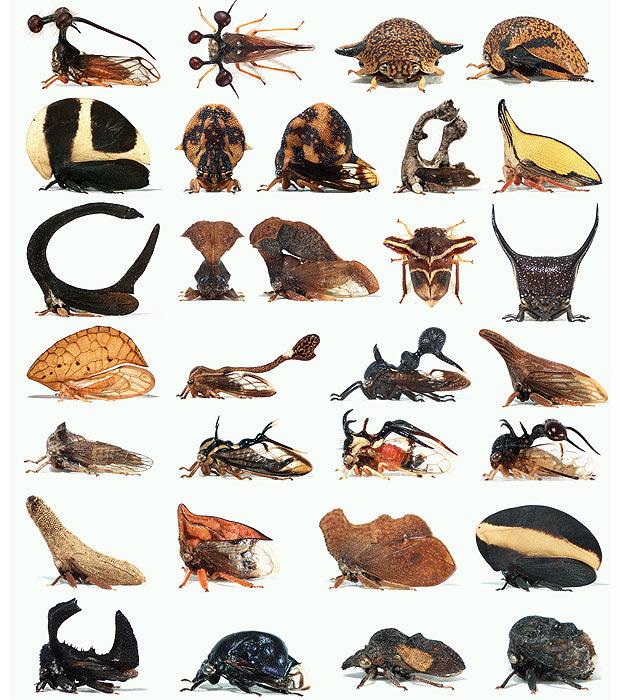 Estrutura ocorre em formatos, cores e tamanhos diferentes  (Foto: Nature)