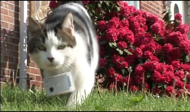 Com uma câmera automática, gata que tira 400 fotos por dia (Foto: Reprodução / BBC)