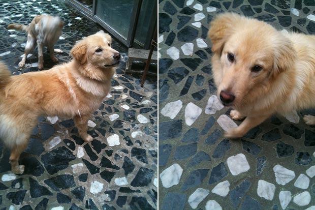 Cão chamado Jaz ficou sumido três dias no aeroporto de Nova York. (Foto: Hopeful Hearts/AP)
