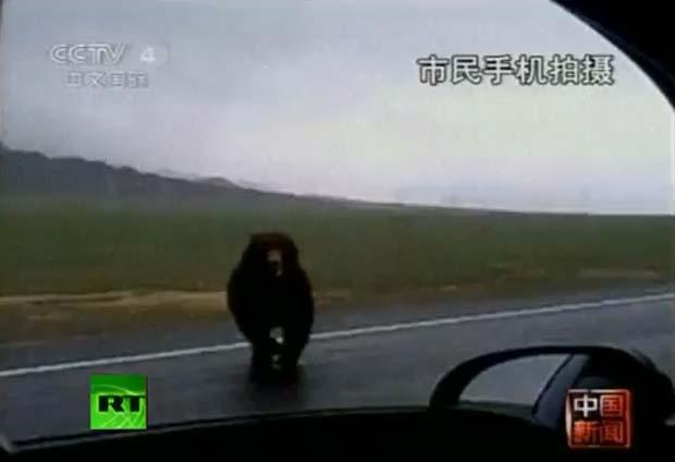 Urso foi flagrado atacando carro na China. (Foto: Reprodução)