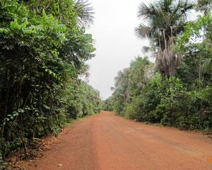 Reserva indígena tem população de 2 mil índios, sendo que alguns não falam português. Na estrada para Pitinga, é muito comum cruzar com onças  (Foto: Laura Brentano/G1)
