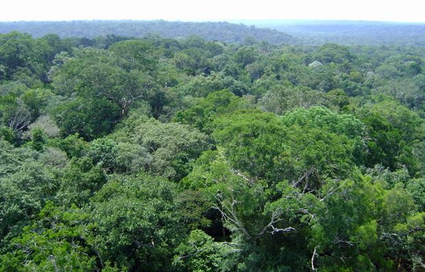 Floresta amazônica (Foto: Dennis Barbosa/Globo Natureza)