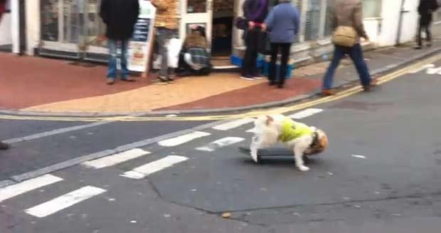 Jonathan Fell foi multado por causa de 'cão skatista'. (Foto: Reprodução)