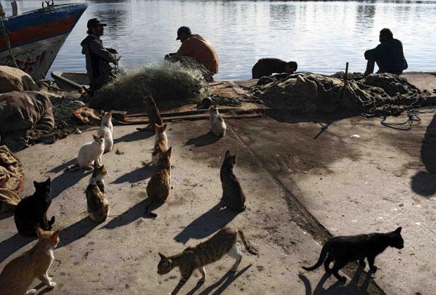 Gatos rondam pescadores à espera de peixes na cidade líbia de Benghazi. O flagrante, em meio à crise política que castiga a Líbia, foi feito pelo fotógrafo Rodrigo Abd. (Foto: AP)