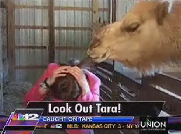 Animal se aproximou e mordeu os cabelos da jornalista. (Foto: Reprodução)