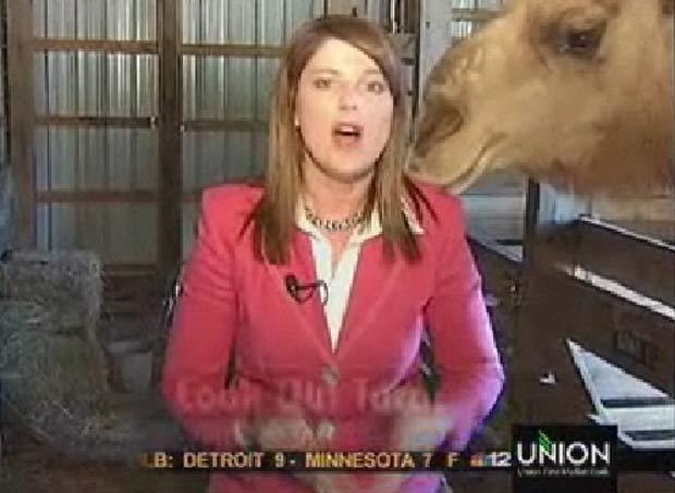 Repórter americana Tara Morgan foi atacada por um camel. (Foto: Reprodução)