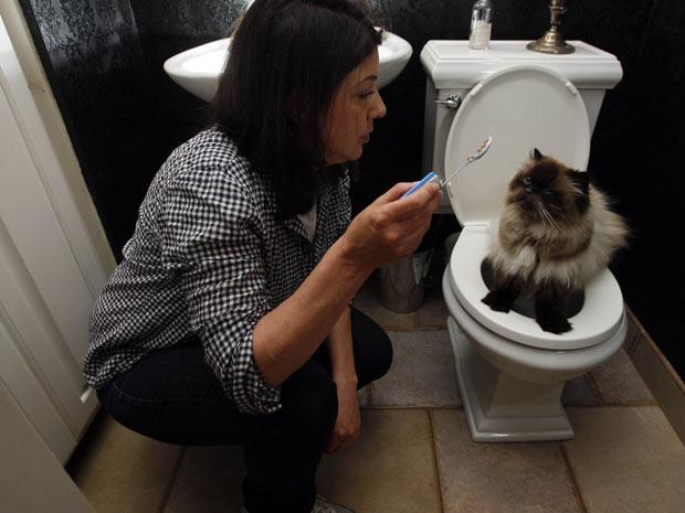 A treinadora de animais Dawn Barkan ensina Charlie, de 4 anos, a usar o toilete, nesta segunda-feira (16), em Green Township, no estado americano de Nova Jersey. Ele é um dos gatos que fez o papel de Mr. Jinx nos filmes 'Entrando numa fria', 'Entrando numa fria maior ainda' e 'Entrando numa fria maior ainda com a família'. (Foto: AP)