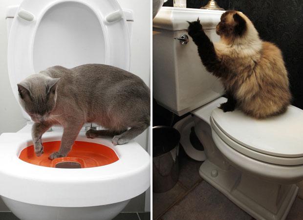 Inspirada nos filmes, Jo Lapidge, cujo gato Doogie aparece nesta foto, criou um kit para ensinar gatos a usar o vaso sanitário. (Foto: AP)