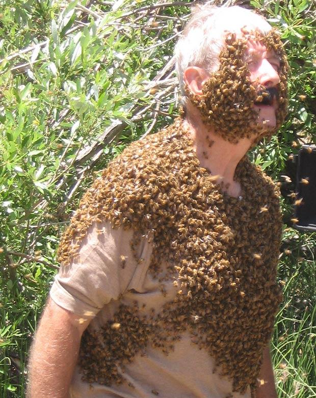 Gary consegue controlar um exame do inseto sem levar nenhuma picada. (Foto: Barcroft Media/Getty Images)
