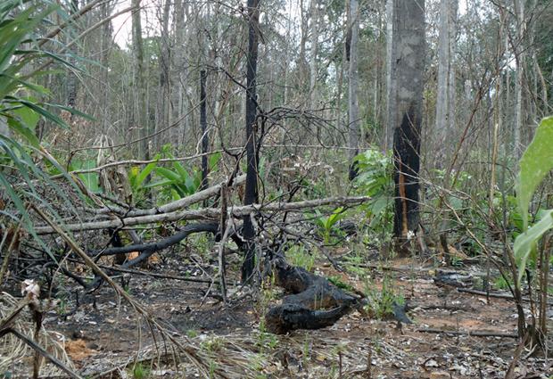 Queimadas no Mato Grosso (Foto: Divulgação)